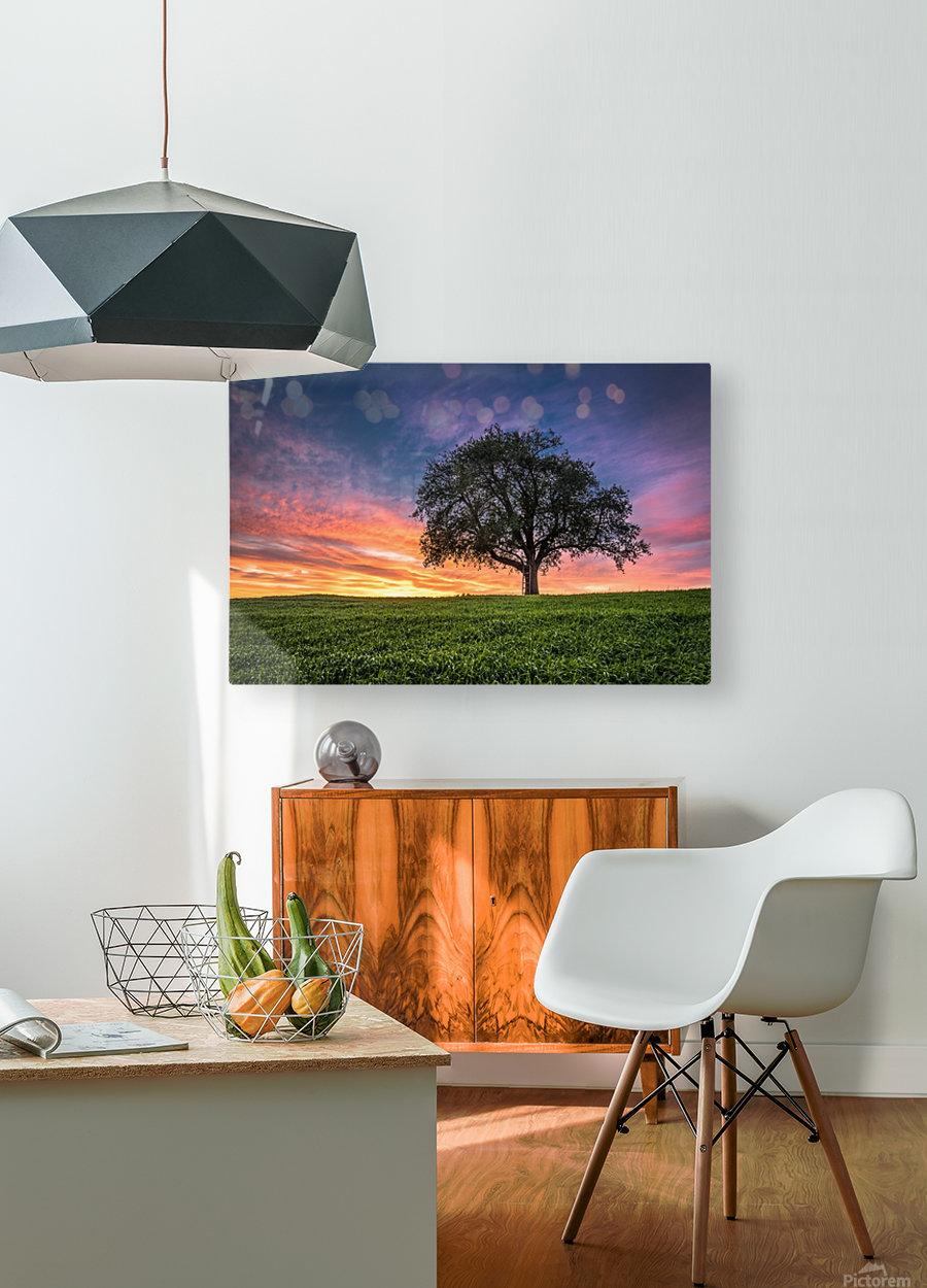Lonely Tree at Sunset  HD Metal print with Floating Frame on Back