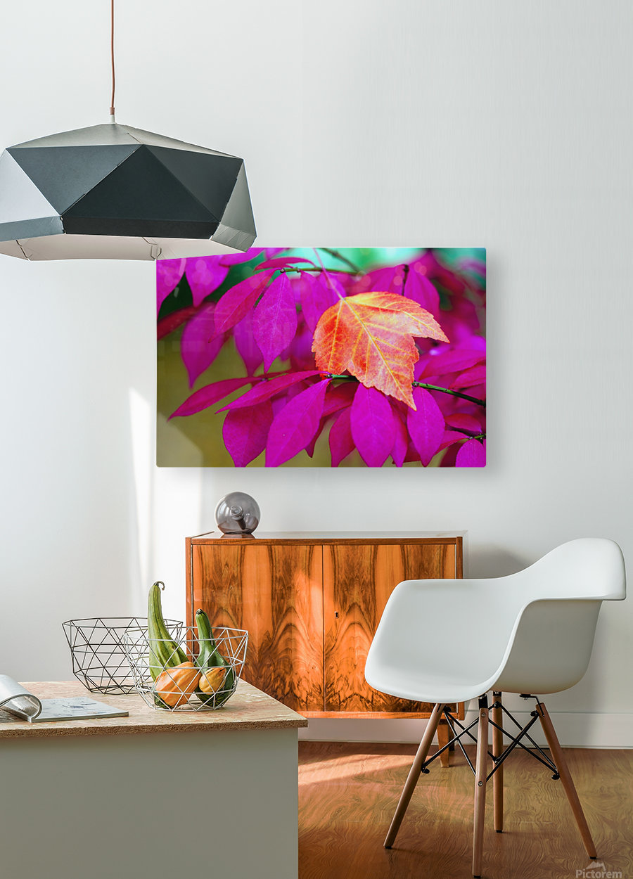 Oregon, United States Of America; A Red Leaf Laying On Bright Pink Leaves  HD Metal print with Floating Frame on Back