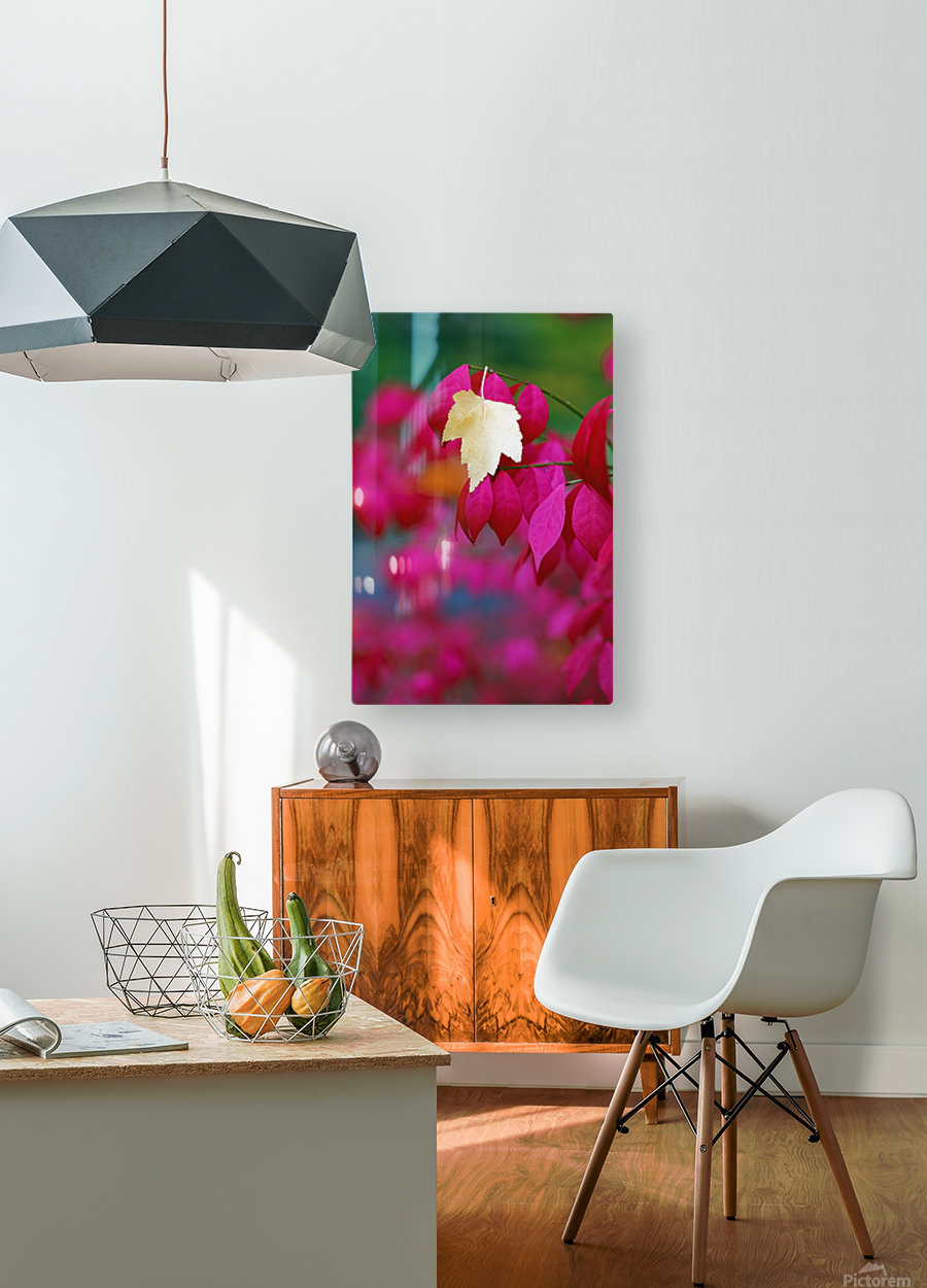 Oregon, United States Of America; A Yellow Leaf Fallen On Pink Leaves  HD Metal print with Floating Frame on Back