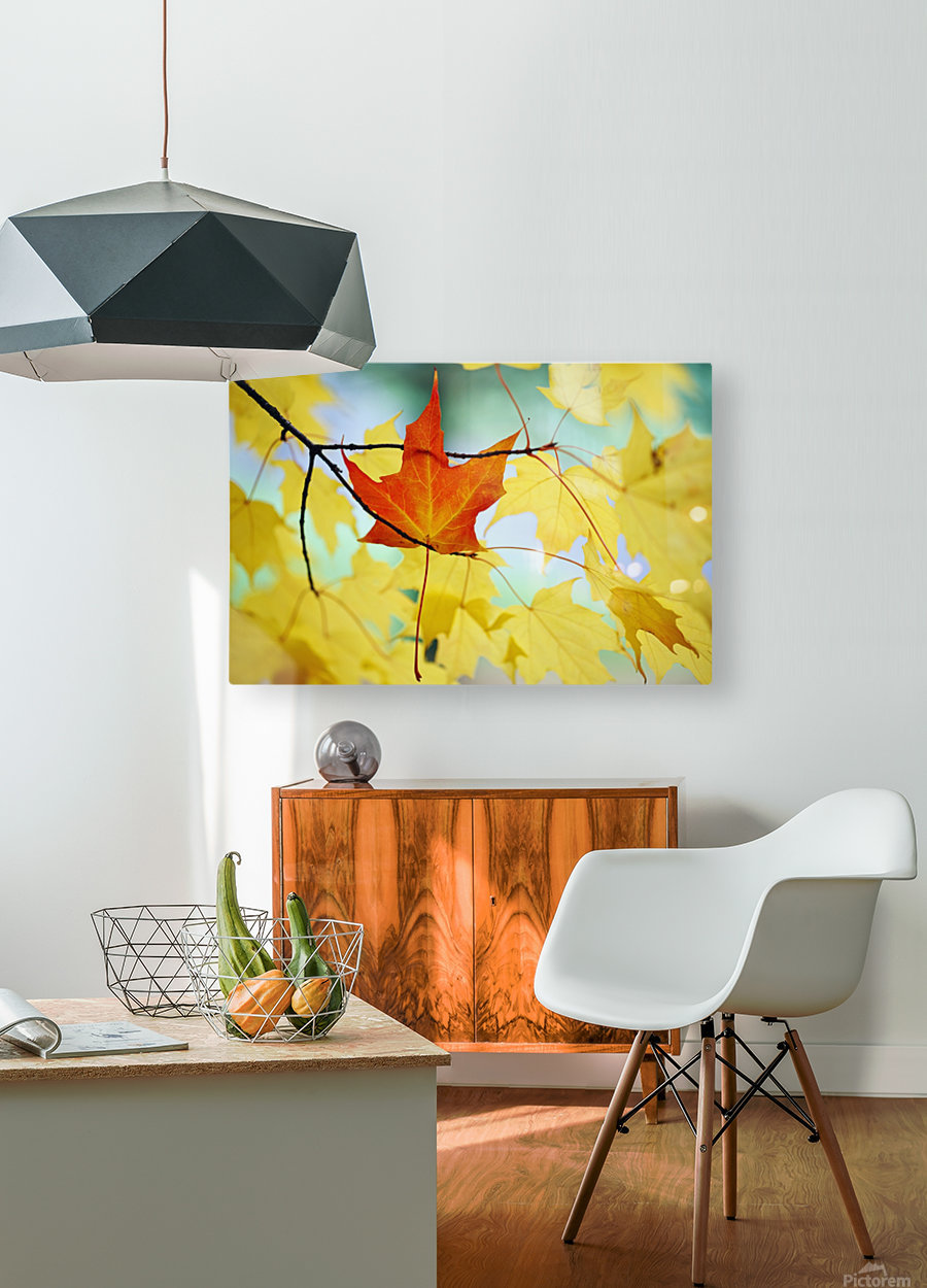 Oregon, United States Of America; An Orange Leaf Fallen On Yellow Leaves  HD Metal print with Floating Frame on Back