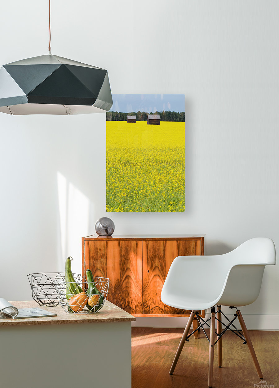 Alberta, Canada; Two Wooden Shacks In A Canola Field  HD Metal print with Floating Frame on Back