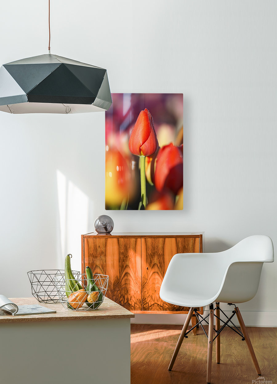 Woodburn, Oregon, United States Of America; Close Up Of A Closed Tulip  HD Metal print with Floating Frame on Back