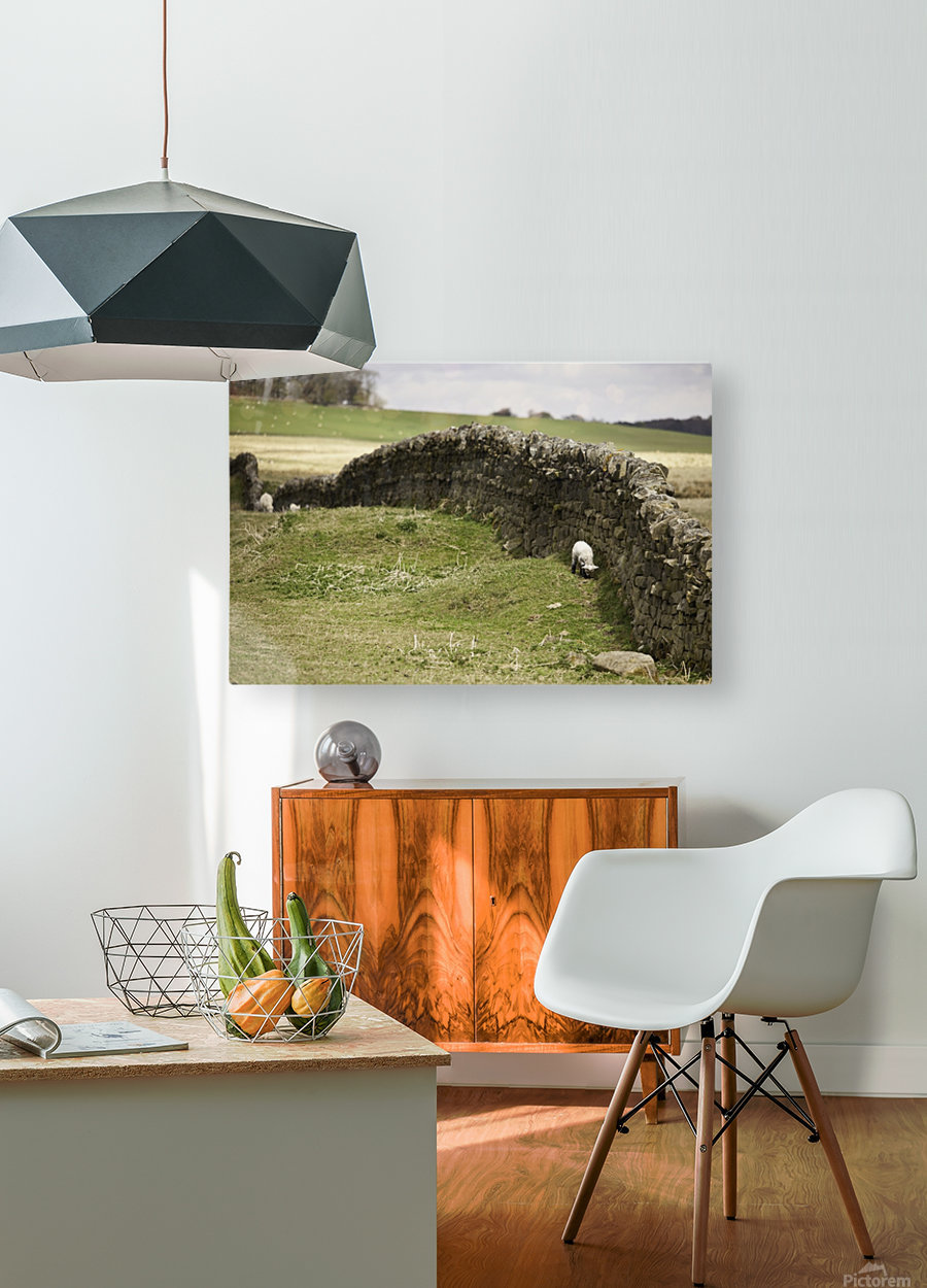 Northumberland, England; Sheep Grazing Along A Stone Wall  HD Metal print with Floating Frame on Back