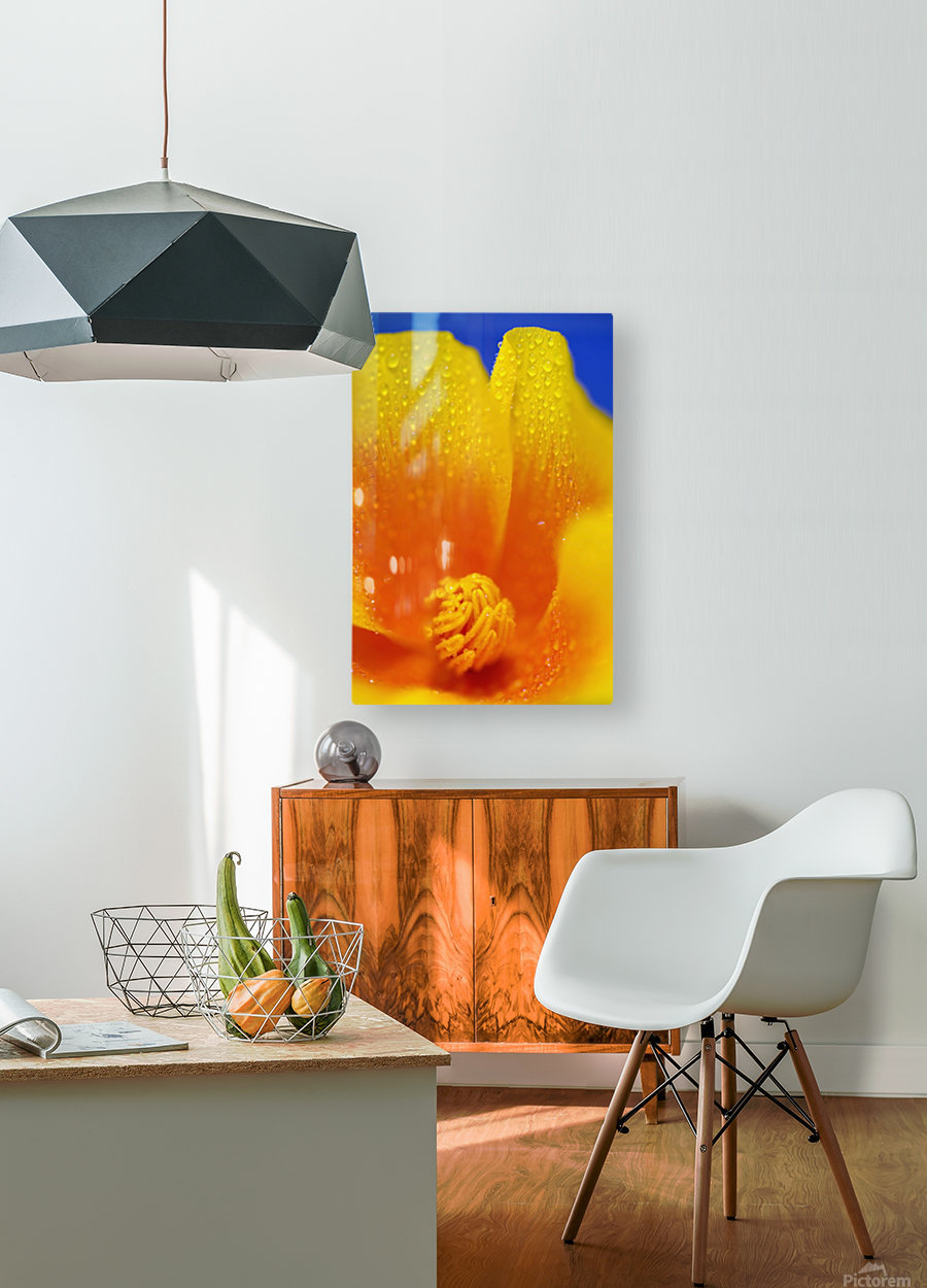 Close Up Of A Poppy With Dew On The Petals; Happy Valley, Oregon, Usa  HD Metal print with Floating Frame on Back