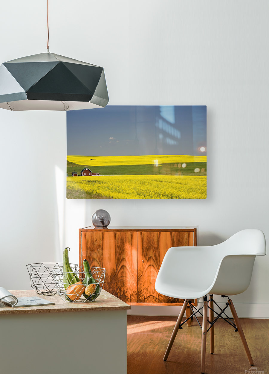 Flowering Canola Fields And A Red Barn; Alberta, Canada  HD Metal print with Floating Frame on Back