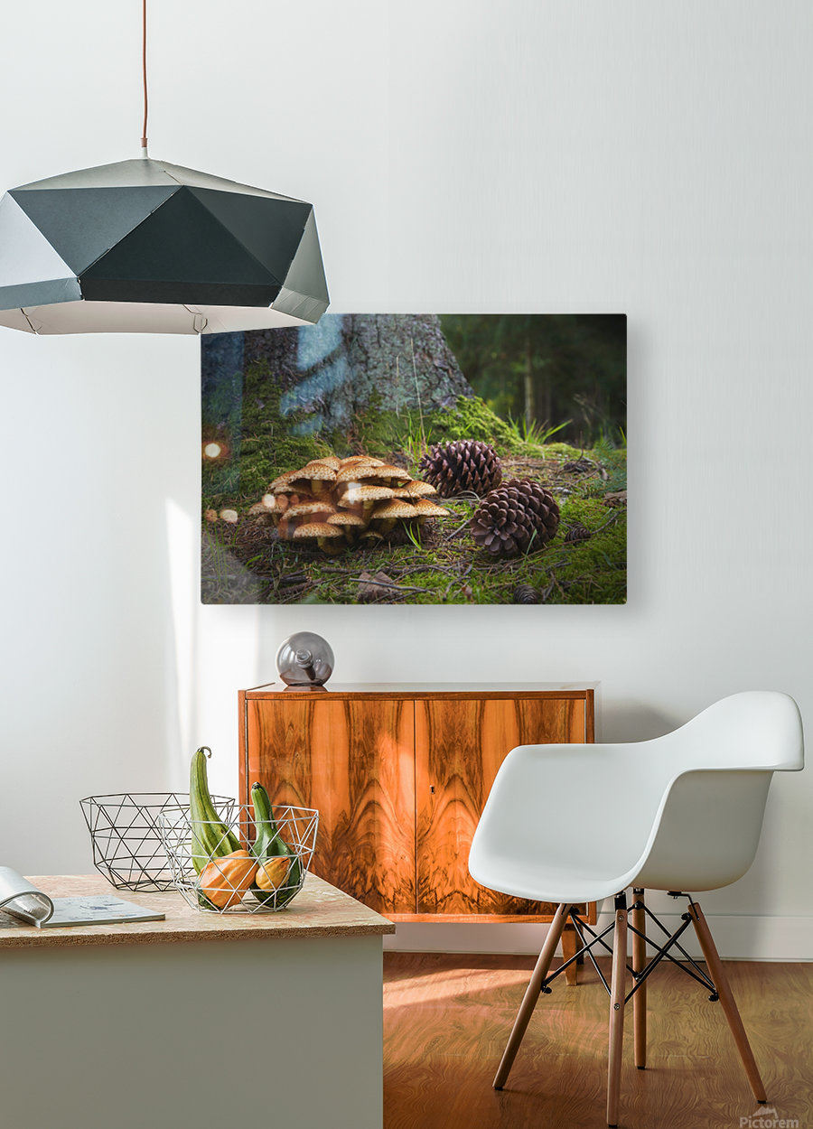 Mushrooms And Pine Cones On The Forest Floor; Northumberland, England  HD Metal print with Floating Frame on Back