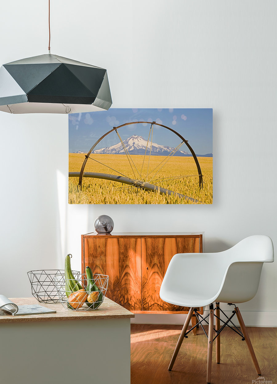 Irrigation Pipe In Wheat Field With Mount Hood In Background; Oregon, Usa  HD Metal print with Floating Frame on Back