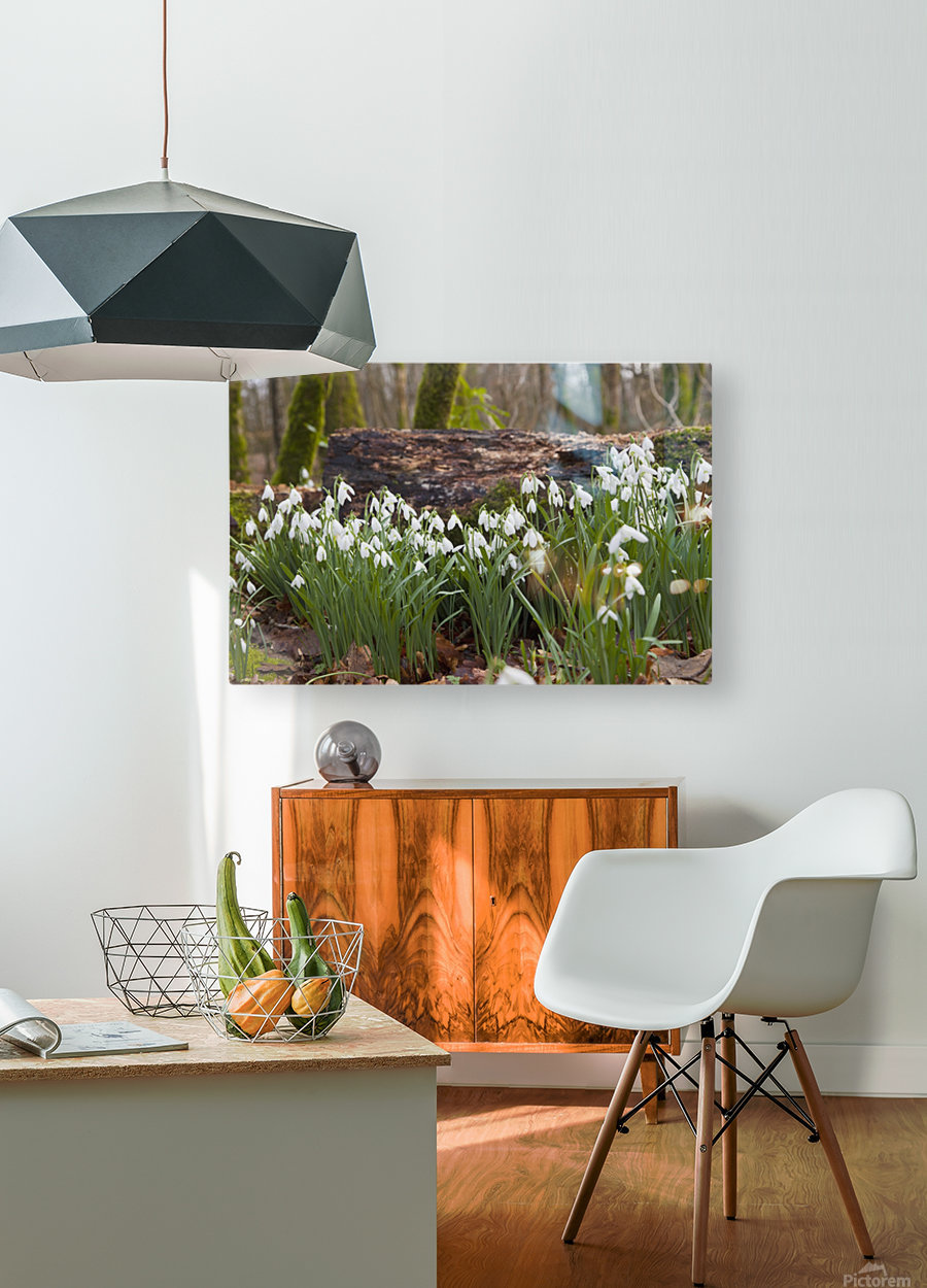 White Flowers Growing On A Forest Floor Beside A Fallen Tree; Dumfries, Scotland  HD Metal print with Floating Frame on Back
