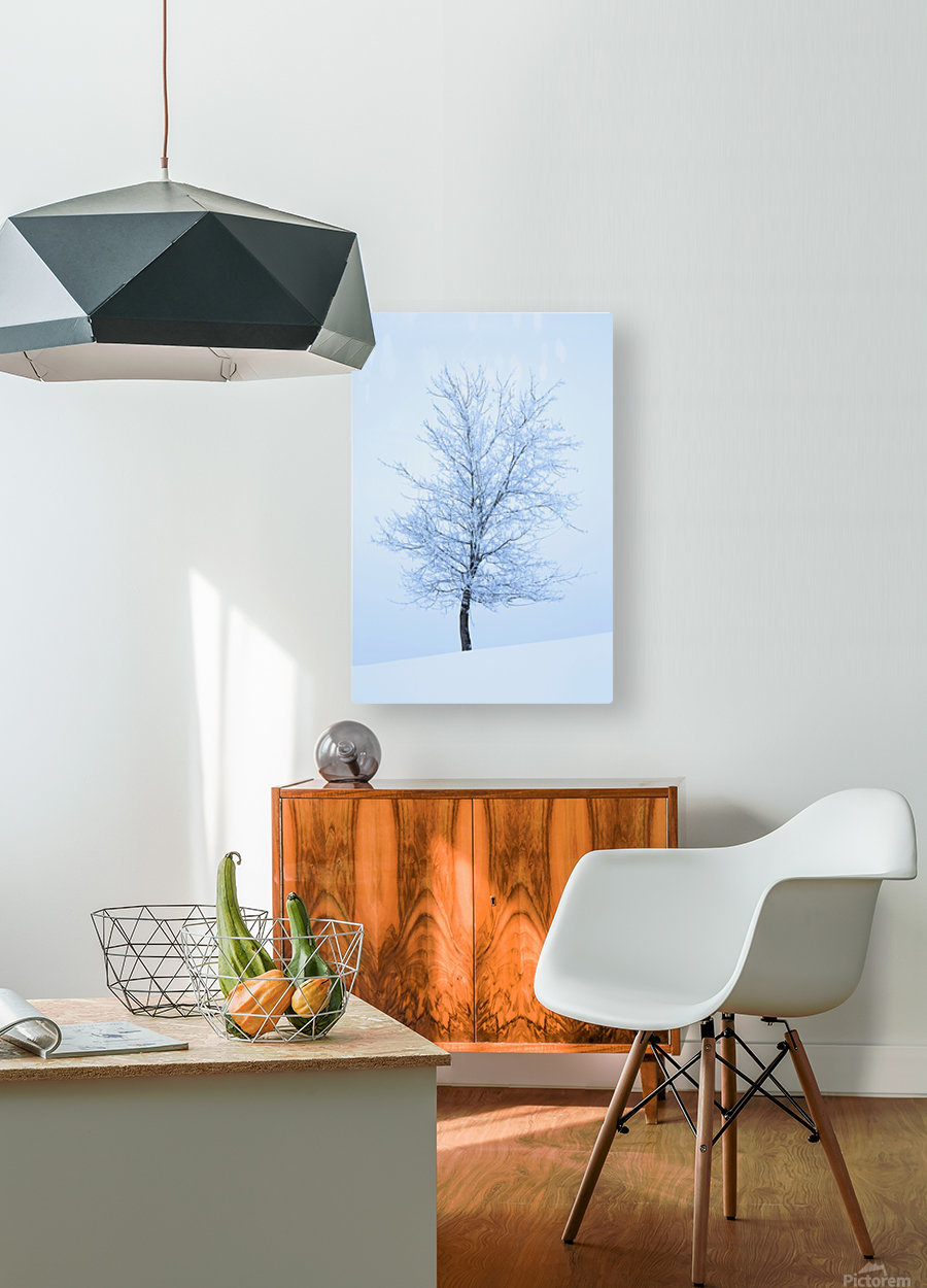 Frost And Snow Cover An Oak Tree; Calgary, Alberta, Canada  HD Metal print with Floating Frame on Back