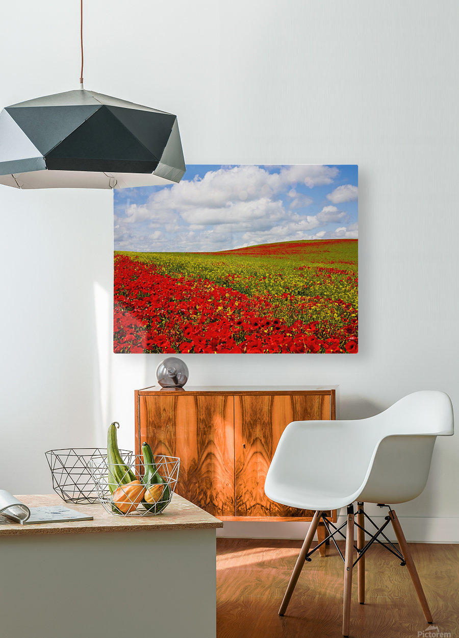 An Abundance Of Red Poppies In A Field; Corbridge, Northumberland, England  HD Metal print with Floating Frame on Back