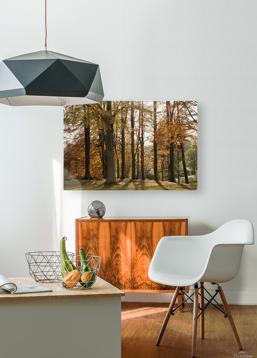 Trees In Autumn Colours Casting A Shadow On The Ground; Northumberland, England  HD Metal print with Floating Frame on Back