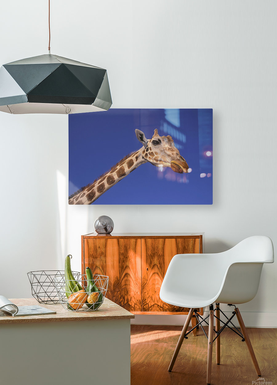 Masai Giraffe, Serengeti, Africa  HD Metal print with Floating Frame on Back