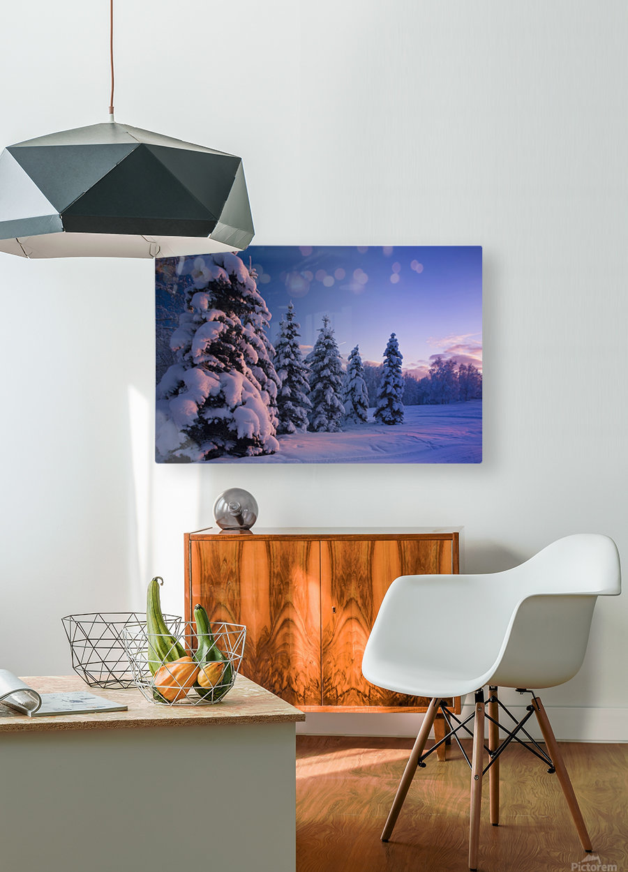 Snow Covered Spruce Trees At Sunset With Pink Alpenglow During Winter, Russian Jack Park, Anchorage, Southcentral Alaska, Usa.  HD Metal print with Floating Frame on Back