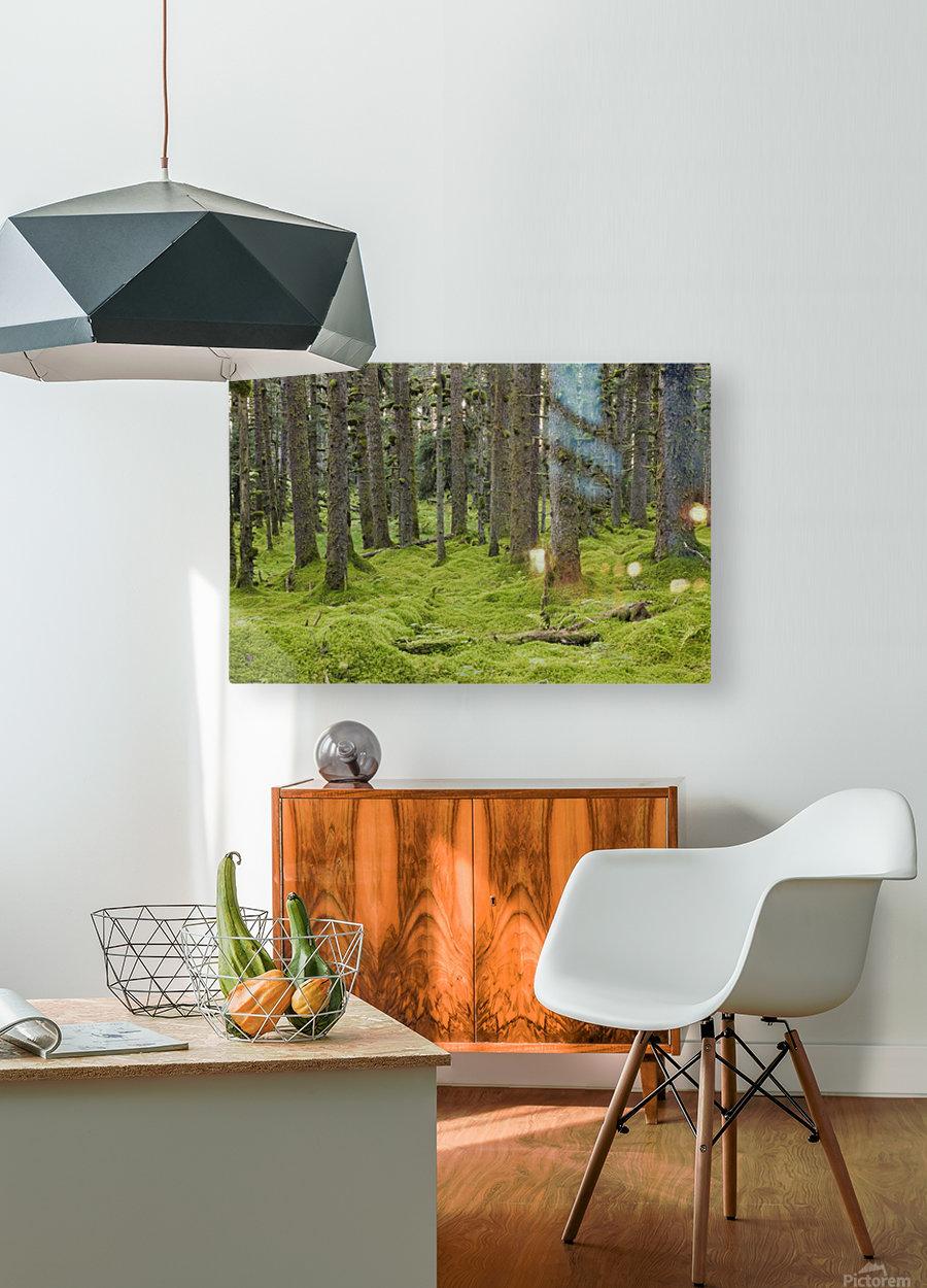 Spruce Forest & Moss Near Coast Kodiak Island Southwest Alaska  HD Metal print with Floating Frame on Back