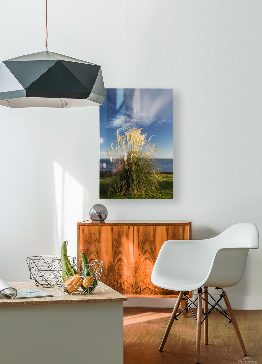 Tall grasses growing at the water's edge;Dumfries and galloway scotland  HD Metal print with Floating Frame on Back