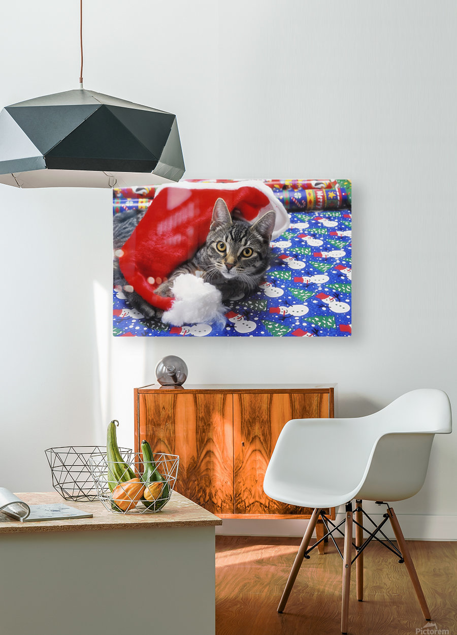 Grey tabby cat with santa claus hat lying on christmas gift wrap;Vancouver british columbia canada  HD Metal print with Floating Frame on Back