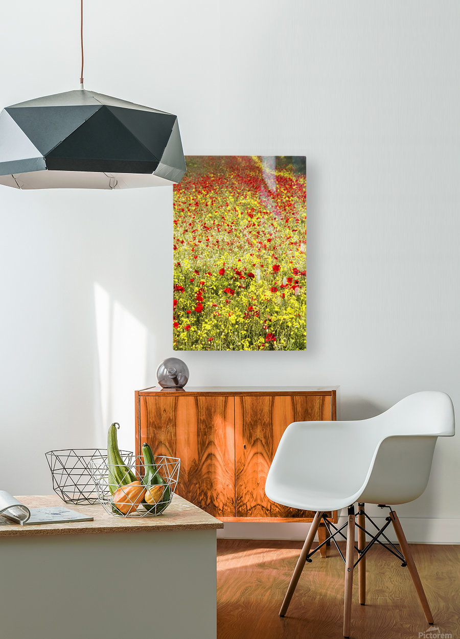 Abundance of red poppies in a field; Whitburn, Tyne and Wear, England  HD Metal print with Floating Frame on Back