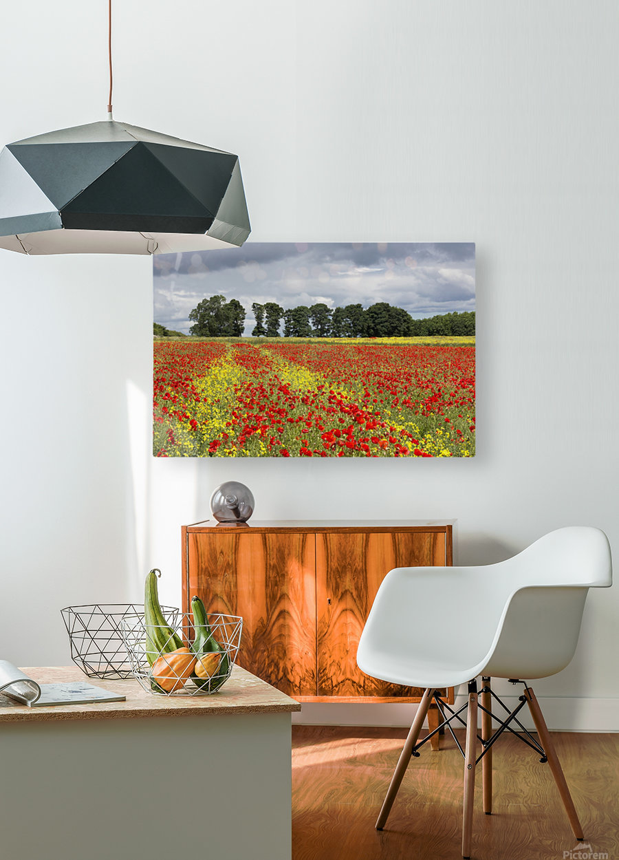 A field with an abundance of red and yellow flowers; Northumberland, England  HD Metal print with Floating Frame on Back