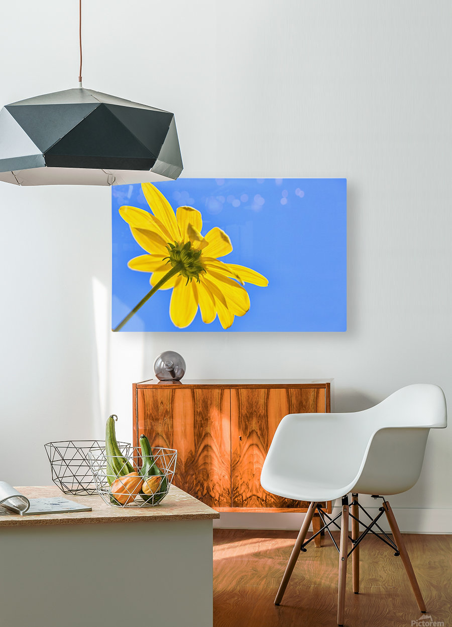 Yellow flower against a blue sky; Bolivia  HD Metal print with Floating Frame on Back
