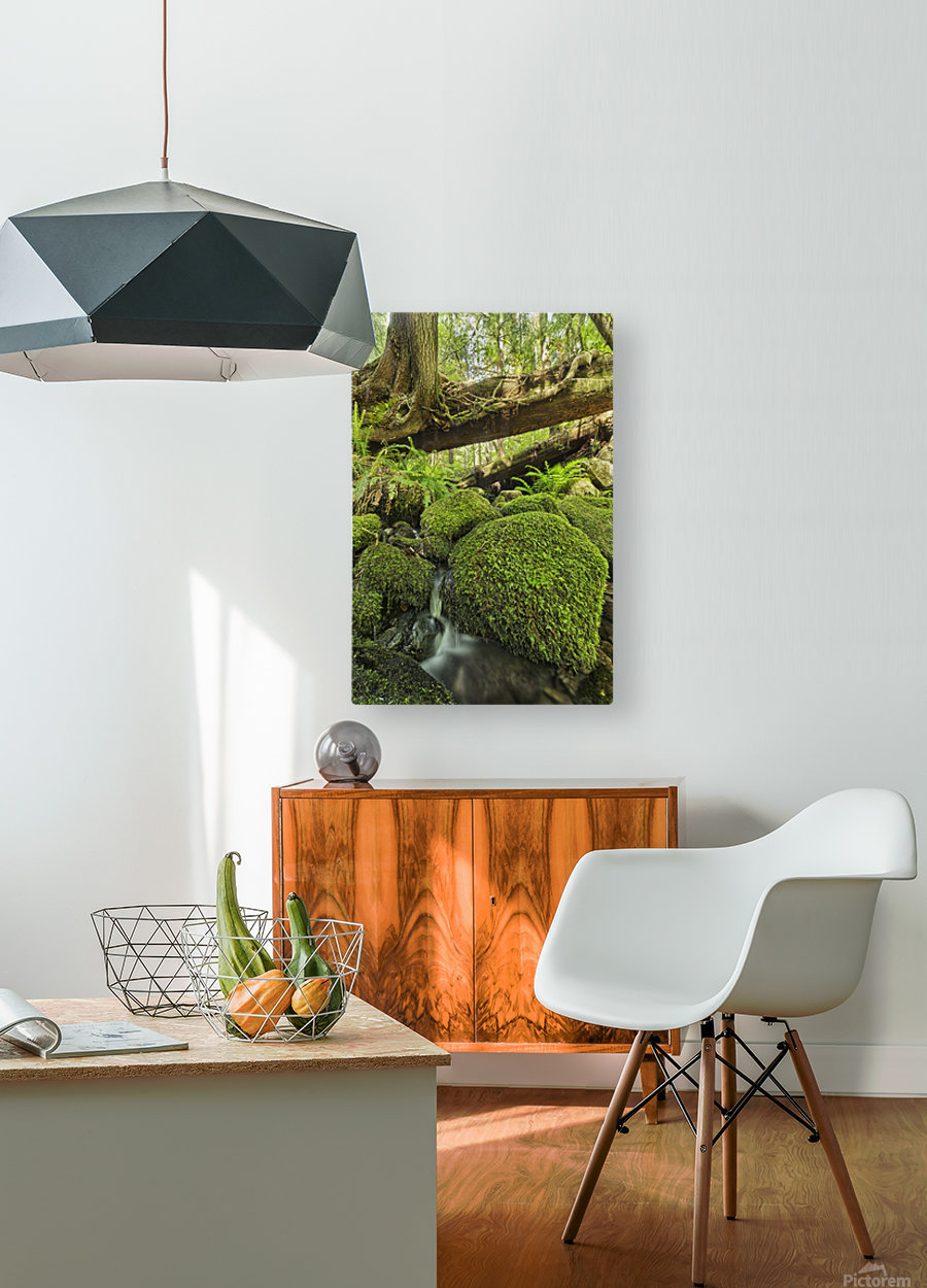 Rainforest in Avatar Grove near Tofino; British Columbia, Canada  HD Metal print with Floating Frame on Back