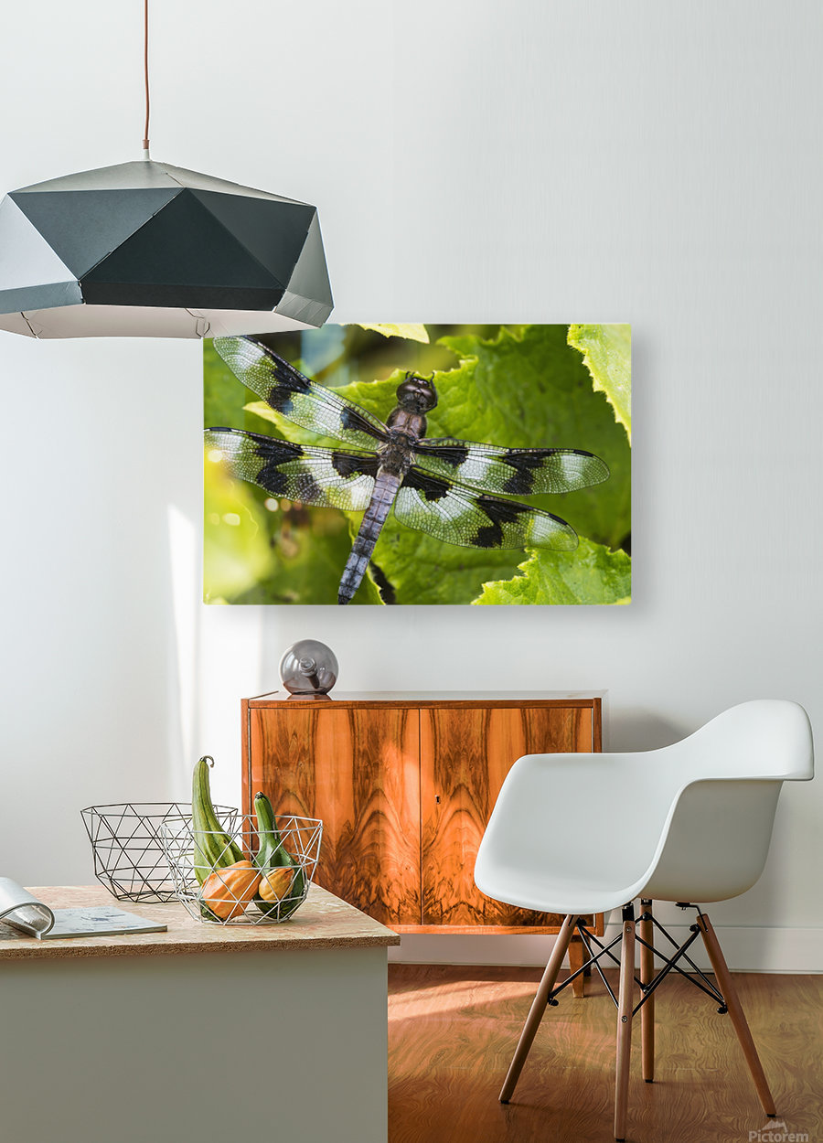 A dragonfly warms up in a vegetable garden; Astoria, Oregon, United States of America  HD Metal print with Floating Frame on Back