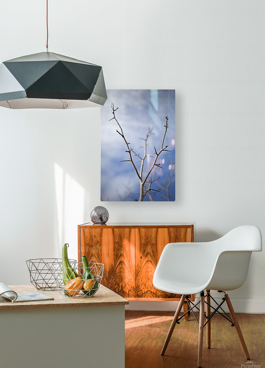 Tree with buds in springtime; Milton, Ontario, Canada  HD Metal print with Floating Frame on Back