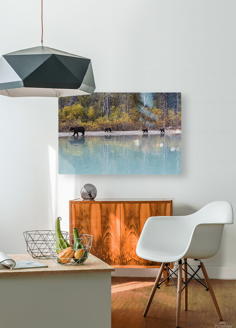 Sow Grizzly and three cubs walking along the shore of Crescent Lake, Lake Clark National Park, Southcentral Alaska, Autumn  HD Metal print with Floating Frame on Back