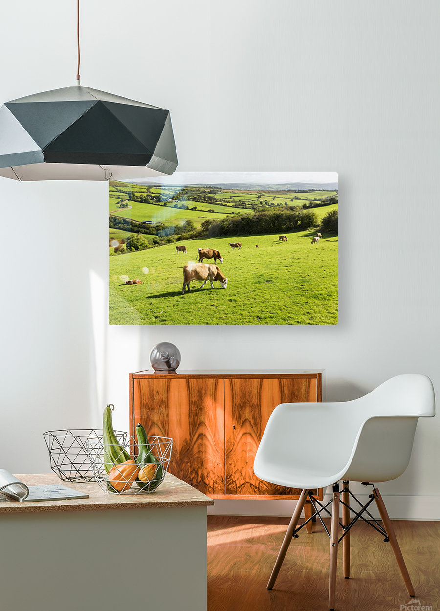 Cattle grazing on lush green hilly pastures with trees separating fields; County Kerry, Ireland  HD Metal print with Floating Frame on Back