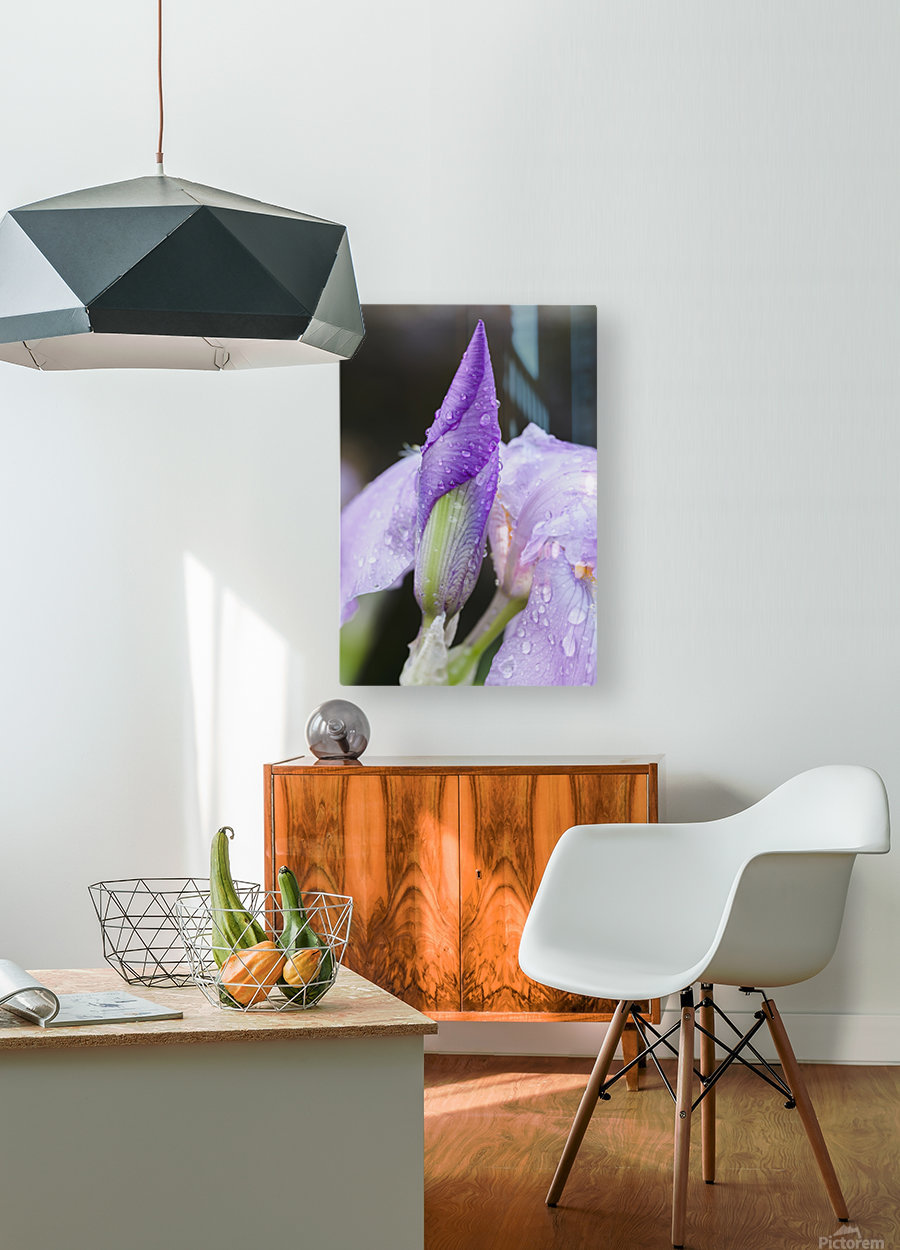 Close up of Iris; Quebec, Canada  HD Metal print with Floating Frame on Back