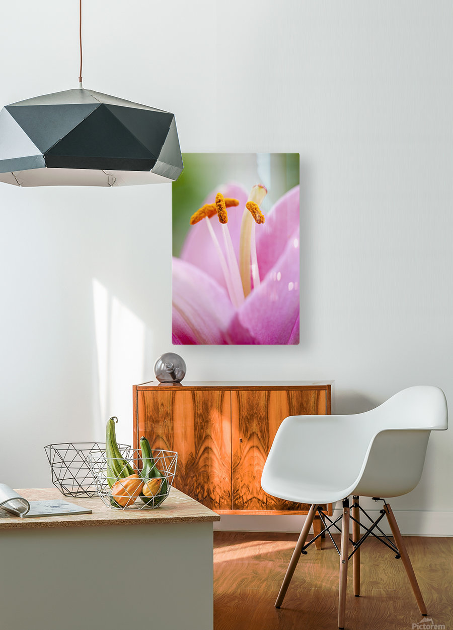 Close up of a lily; Quebec, Canada  HD Metal print with Floating Frame on Back