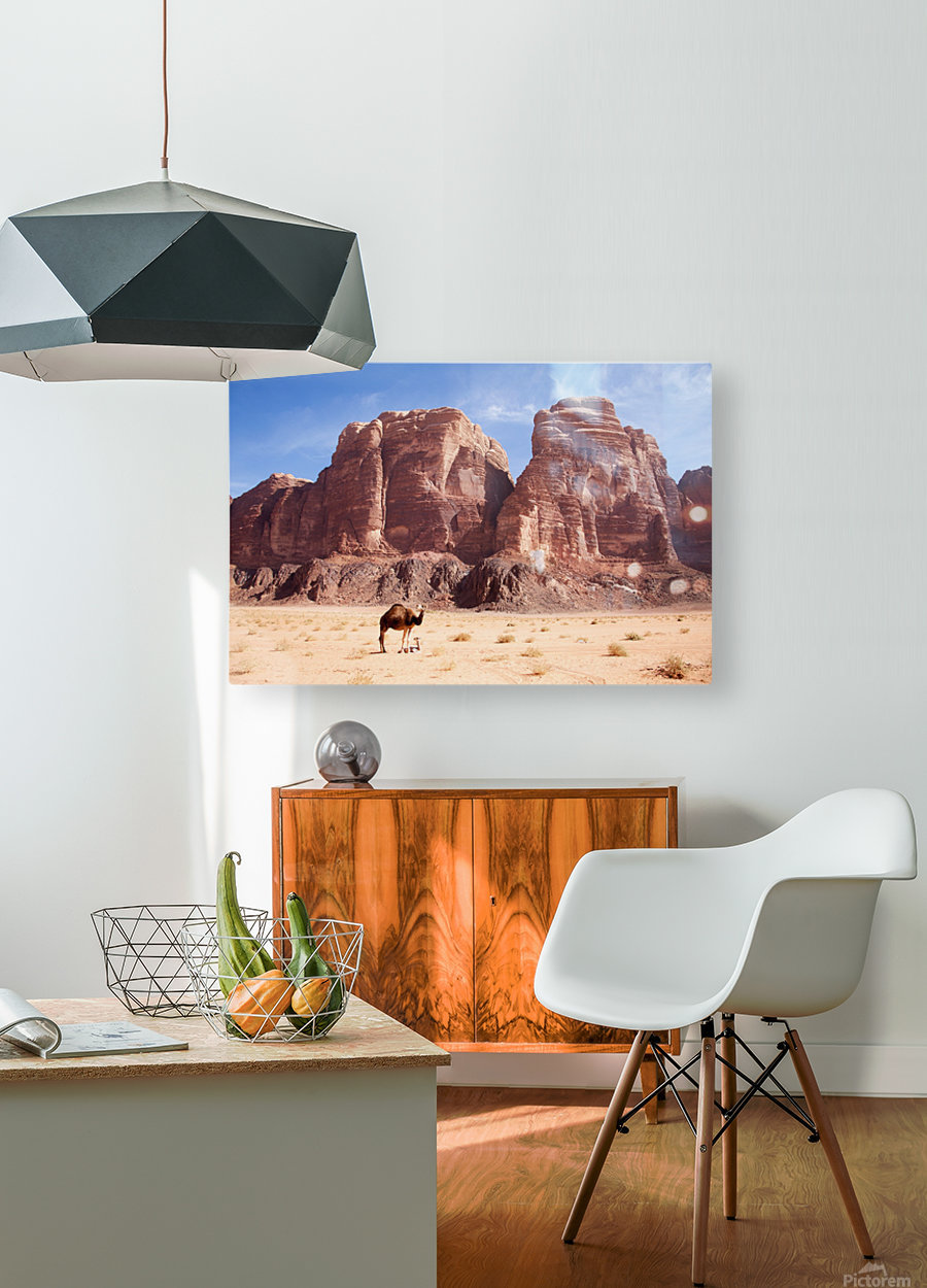 Baby camel and mother; Wadi Rum, Jordan  HD Metal print with Floating Frame on Back