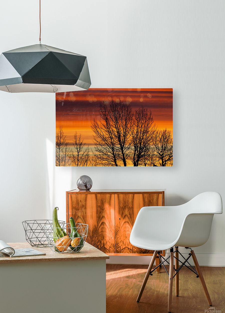 Silhouetted tree branches with dramatically colourful clouds at sunrise; Calgary, Alberta, Canada  HD Metal print with Floating Frame on Back