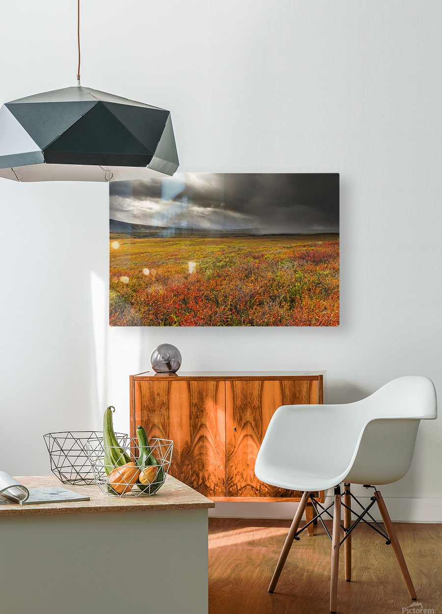 A storm passes over the bright colors of autumn in Denali National Park & Preserve, Alaska.  HD Metal print with Floating Frame on Back