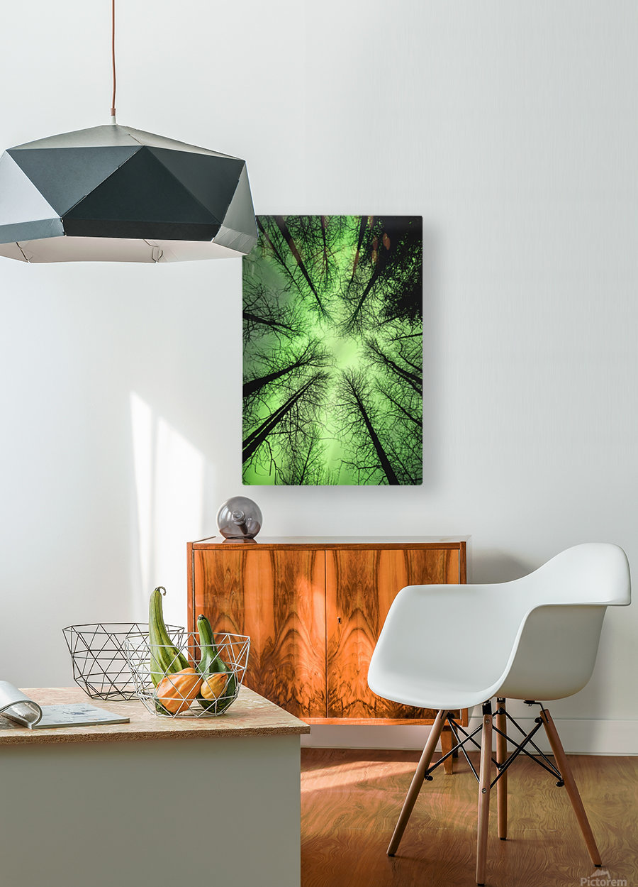 The aurora borealis glows overhead in a spruce forest in Portage Valley, Chugach National Forest, Southcentral Alaska.  HD Metal print with Floating Frame on Back