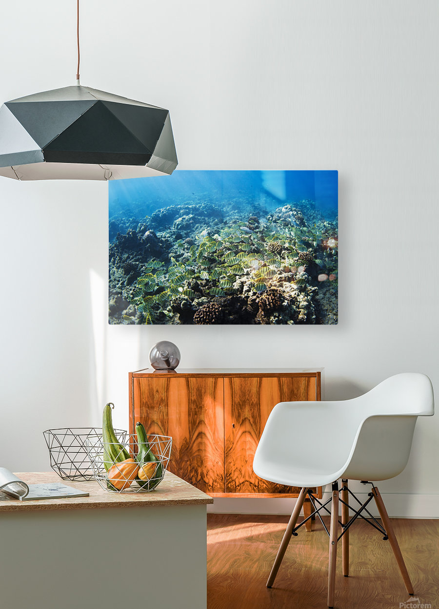 Tropical Reef in Hawaii-  HD Metal print with Floating Frame on Back