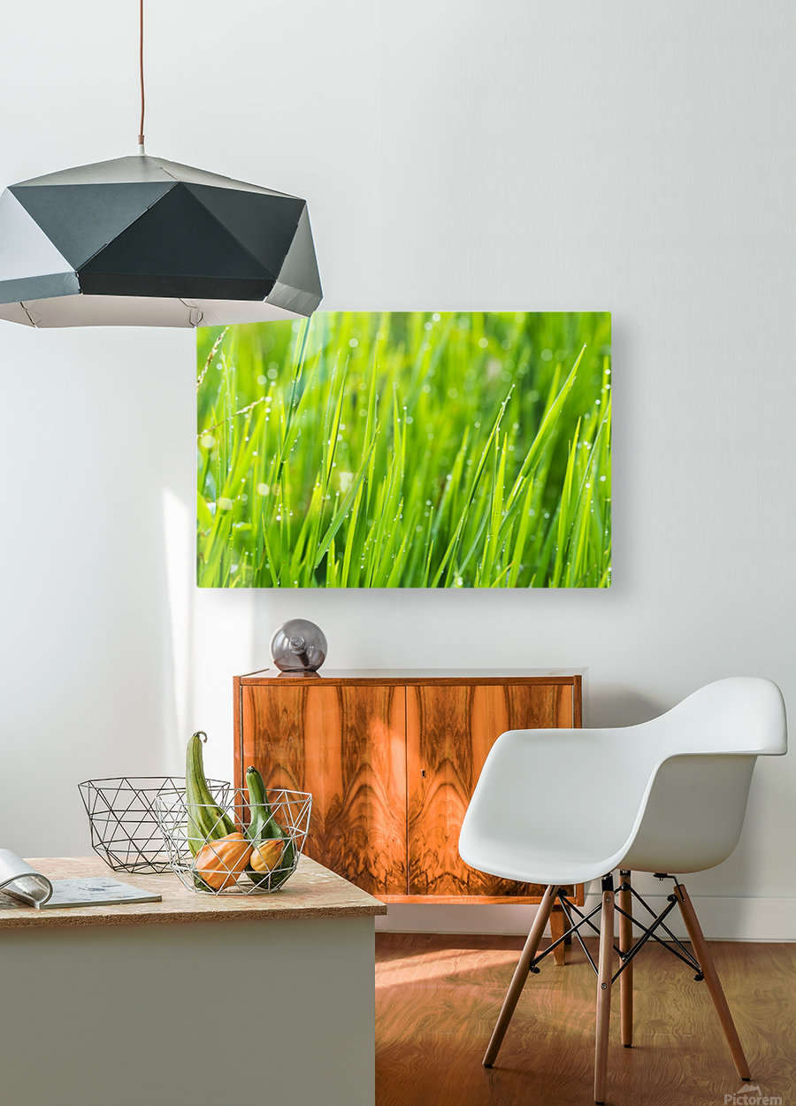 Close up of fresh grass with water drops in the early morning  HD Metal print with Floating Frame on Back
