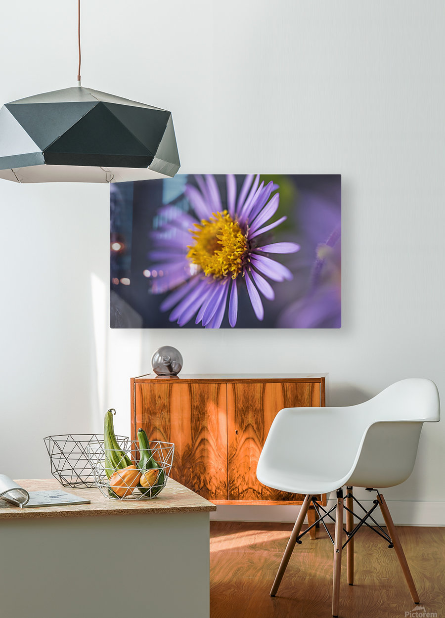 Siberian Aster along the Marsh Fork of the Canning River in the Arctic National Wildlife Refuge, Summer, Alaska    HD Metal print with Floating Frame on Back