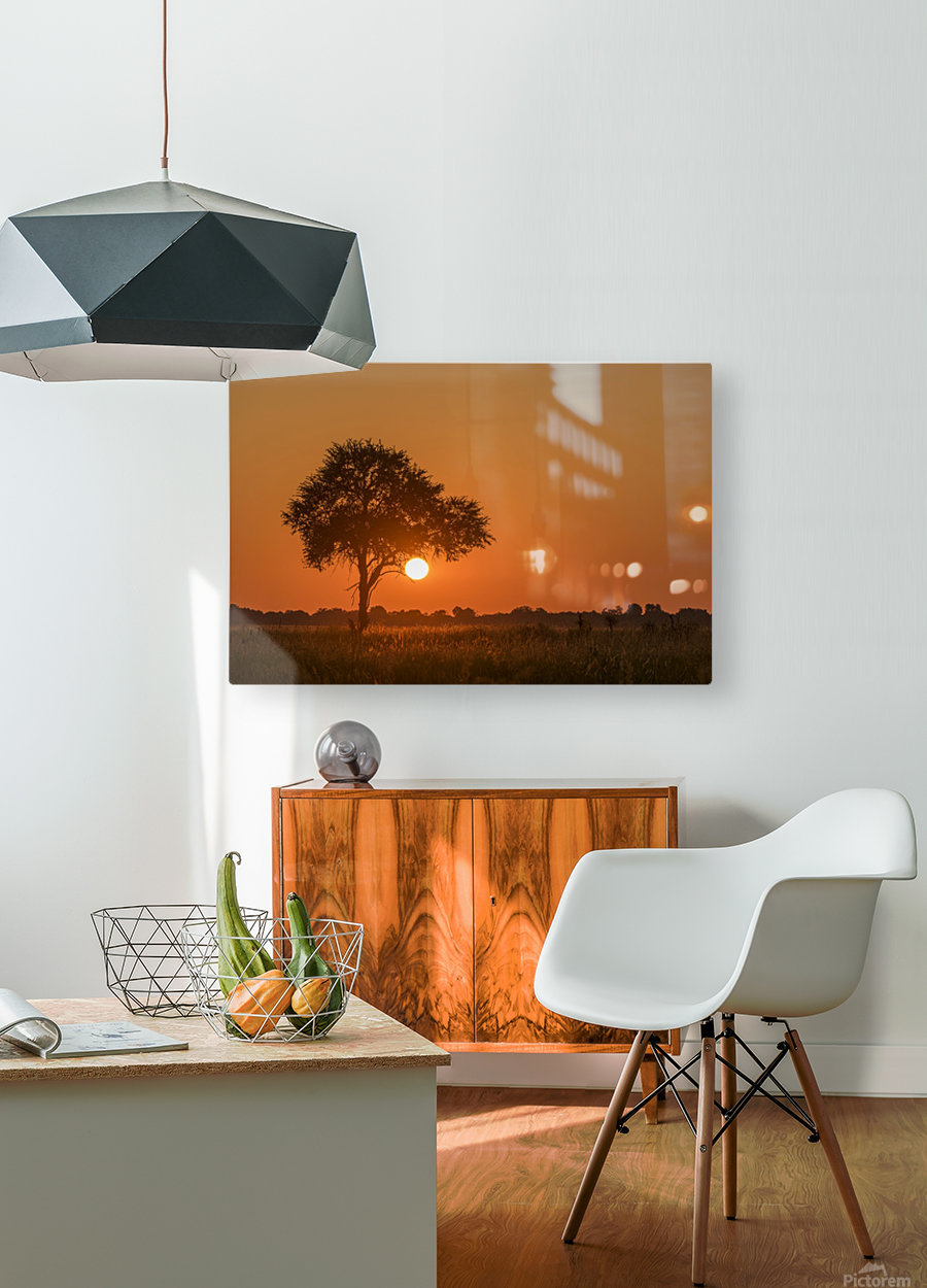 Backlit grass and silhouetted tree at sunset; Botswana  HD Metal print with Floating Frame on Back
