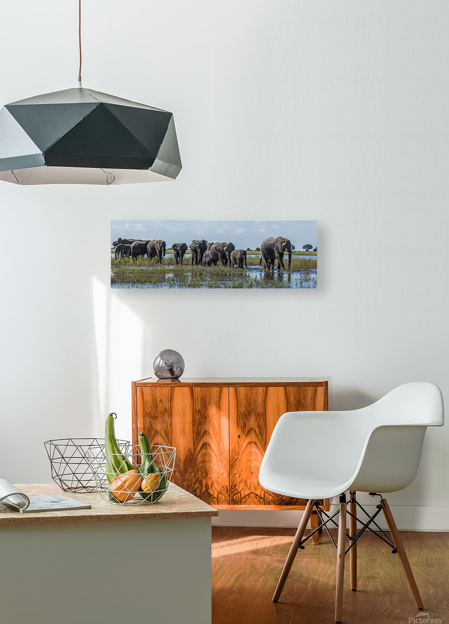 Panorama of elephants (Loxodonta africana) crossing shallow muddy river; Botswana  HD Metal print with Floating Frame on Back