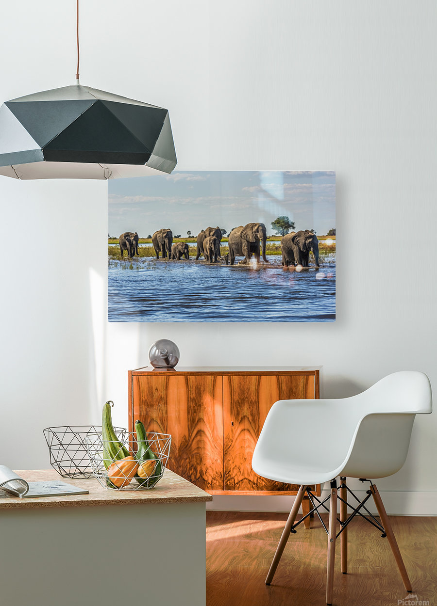 Line of elephants (Loxodonta africana) crossing river in sunshine; Botswana  HD Metal print with Floating Frame on Back
