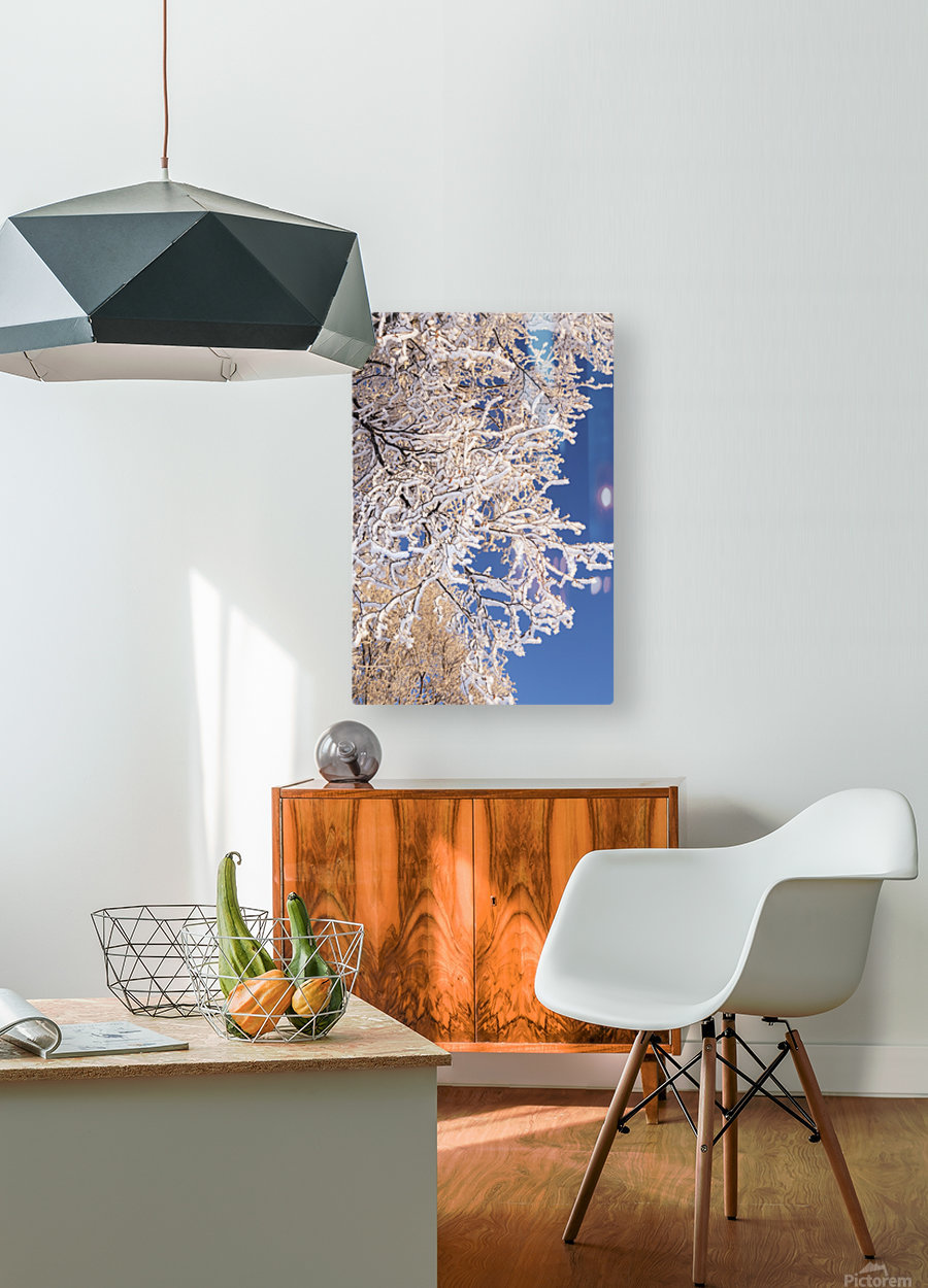 Hoar frosted tree branches against a blue sky; Anchorage, Alaska, United States of America  HD Metal print with Floating Frame on Back