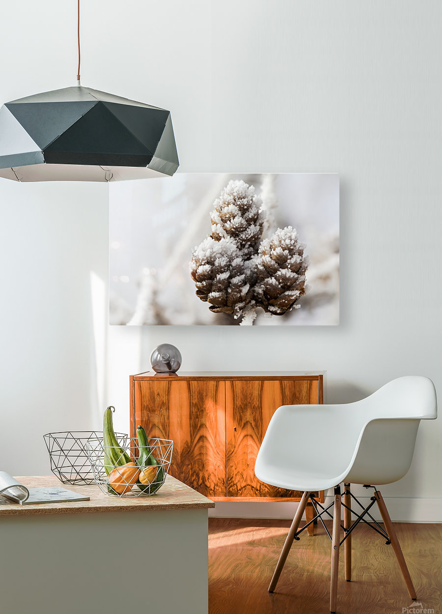 Close up of frosted pine cones; Calgary, Alberta, Canada  HD Metal print with Floating Frame on Back