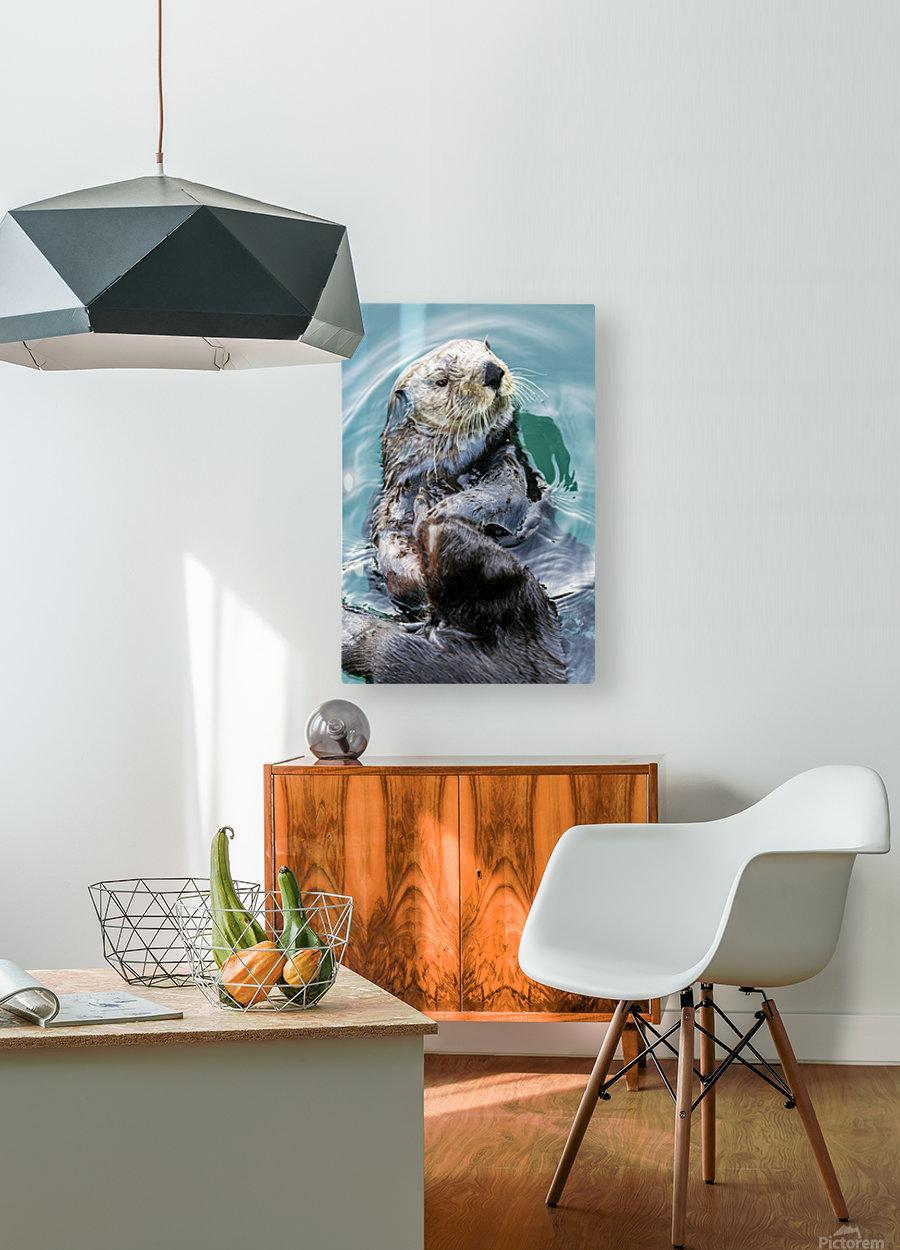 Sea Otter (Enhydra lutris) eating in Seward boat harbour on the Kenai Peninsula in South-central Alaska; Seward, Alaska, United States of America  HD Metal print with Floating Frame on Back