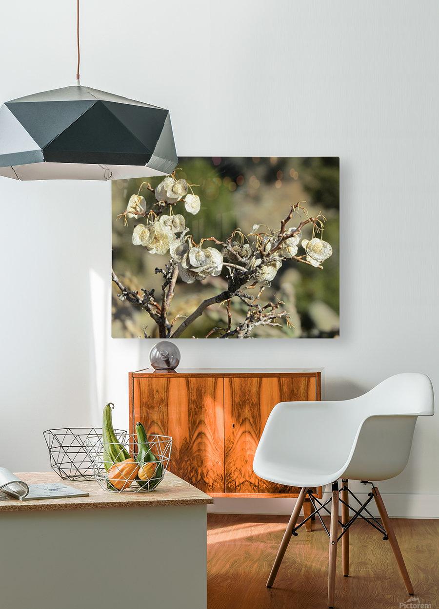 Weeds VP2  HD Metal print with Floating Frame on Back