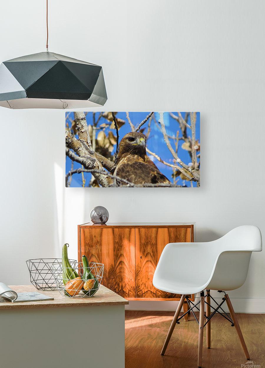 Golden Eagle VP3  HD Metal print with Floating Frame on Back
