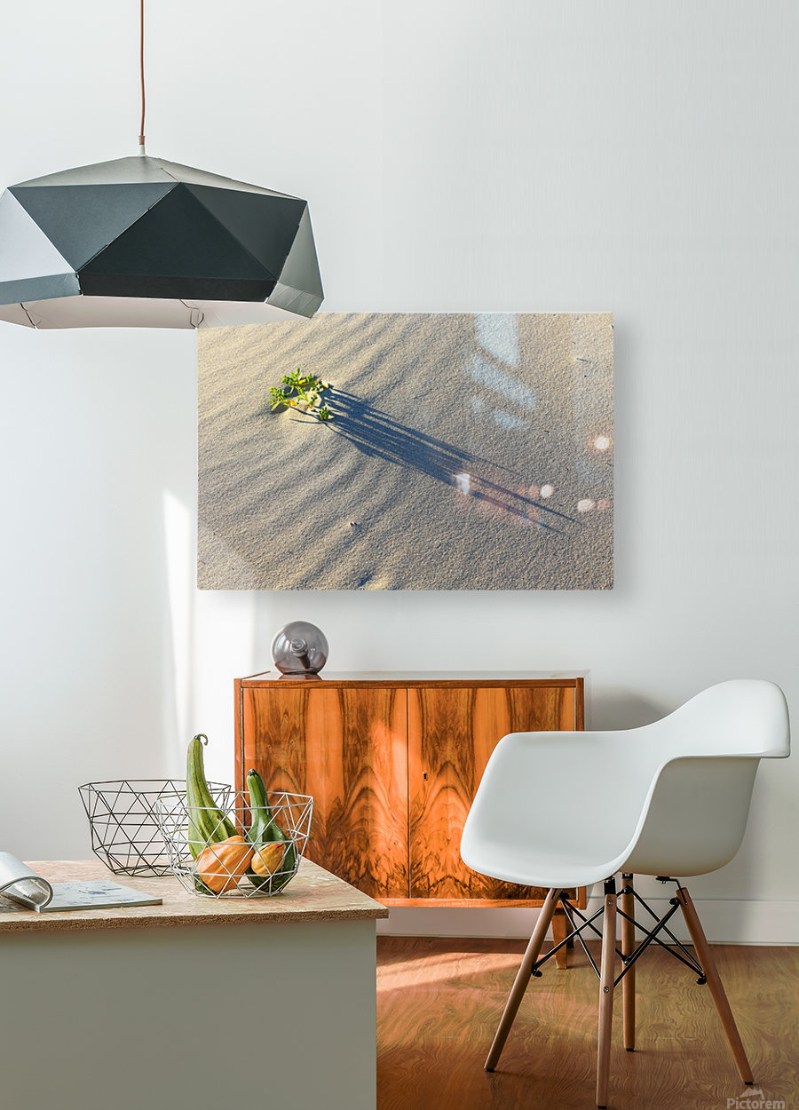 Evening Shadows on Dune  HD Metal print with Floating Frame on Back