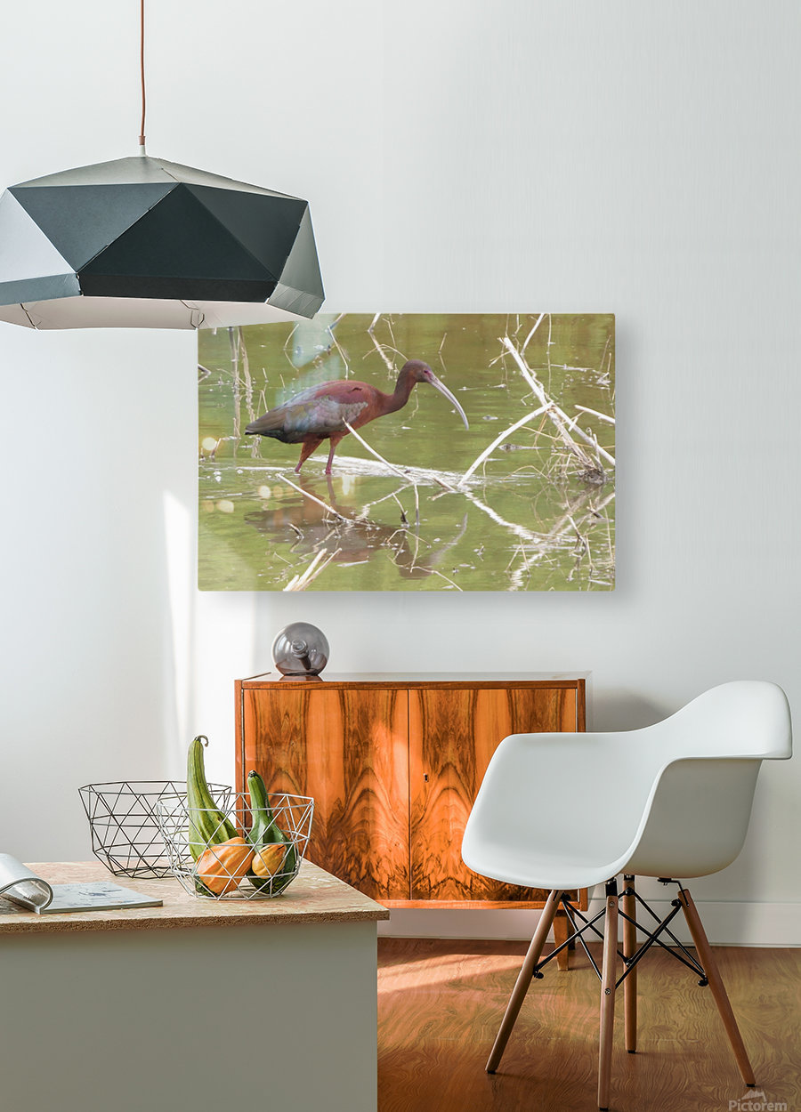 Glossy Ibis VP2  HD Metal print with Floating Frame on Back