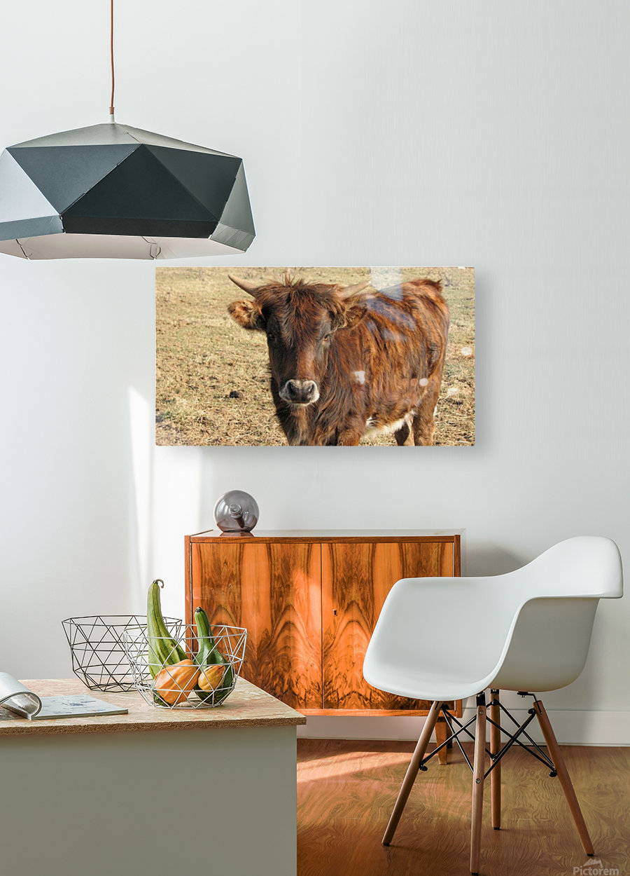 Bull in the Spring VP1  HD Metal print with Floating Frame on Back