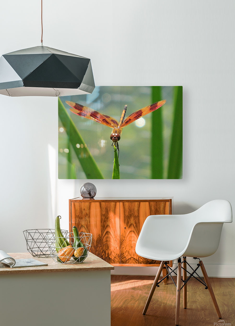 Dragonfly in Lincoln Park VP1  HD Metal print with Floating Frame on Back
