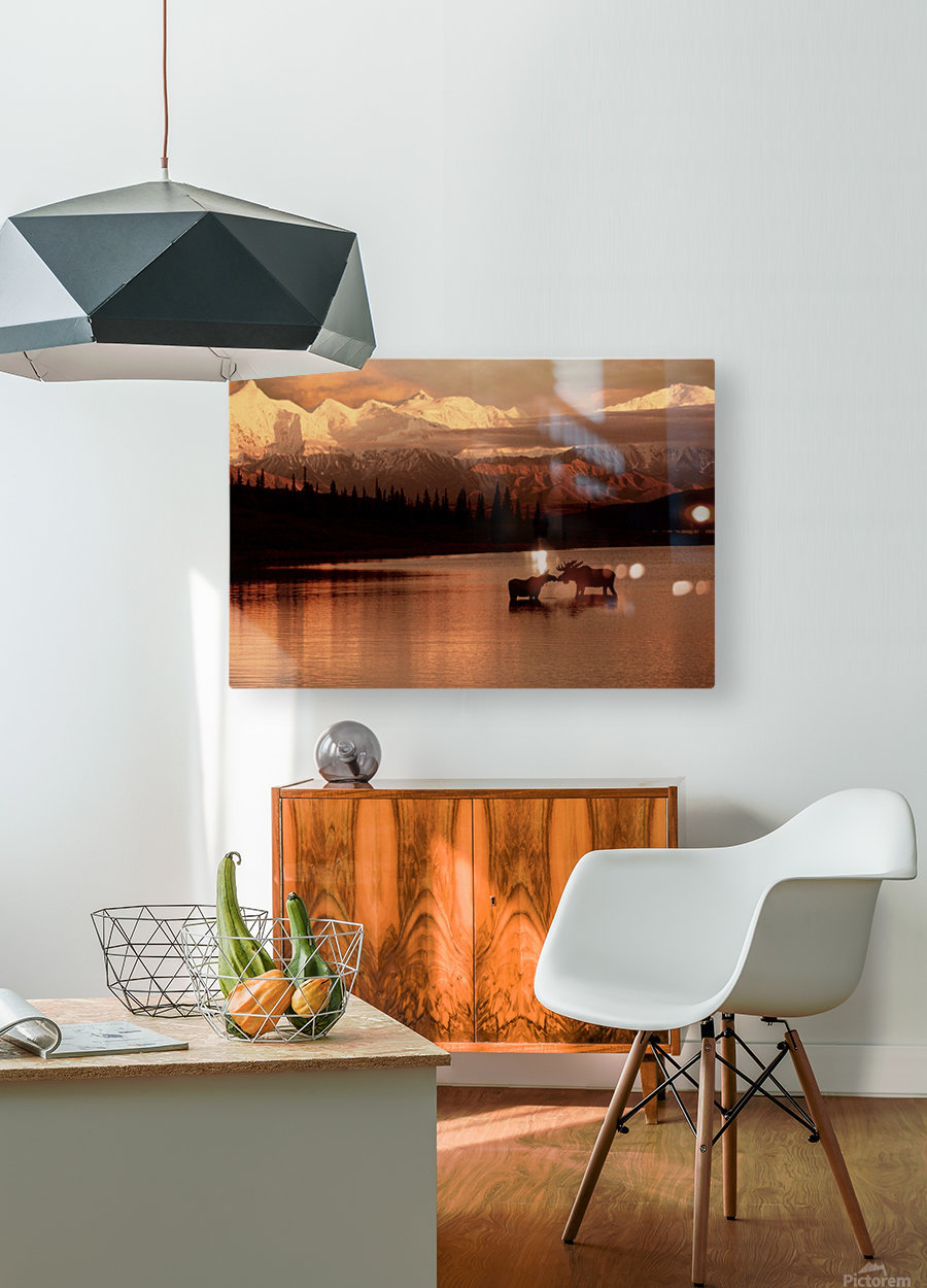 Moose Kissing  HD Metal print with Floating Frame on Back